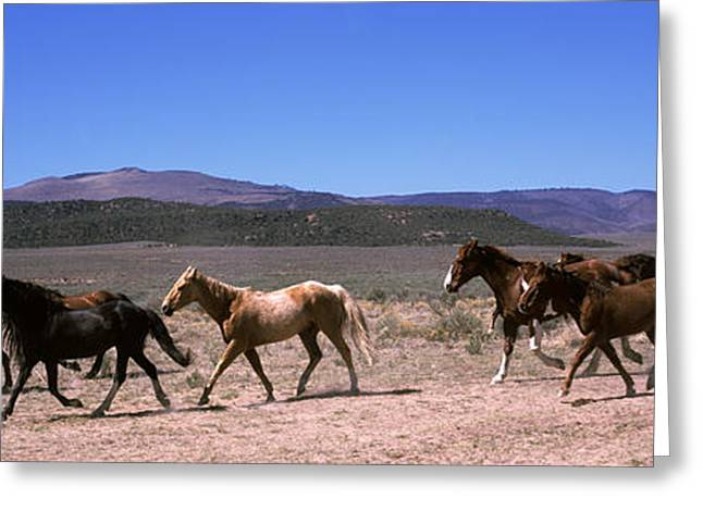 The Hills Greeting Cards - Horses Running In A Field, Colorado, Usa Greeting Card by Panoramic Images