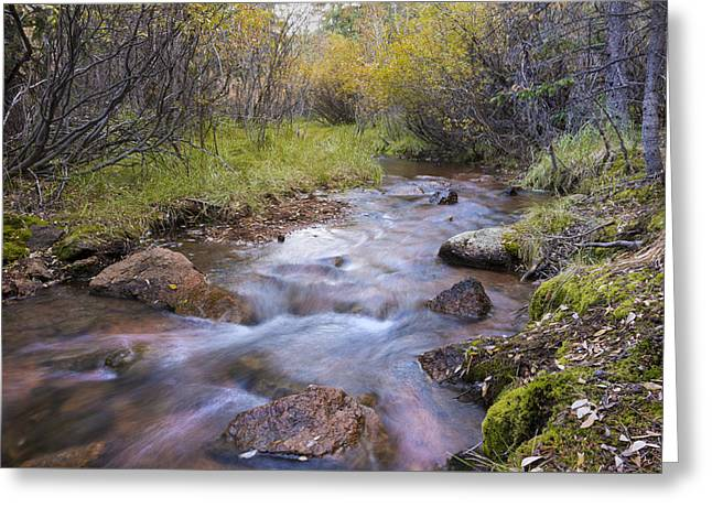 Horsethief Creek - Cripple Creek Colorado Greeting Card by Brian Harig