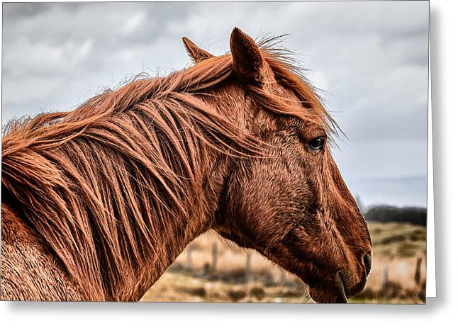 Horsey Horsey Greeting Card by John Farnan