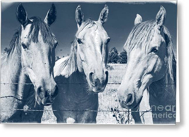 Triplets Greeting Cards - Horsing Around Greeting Card by Edward Fielding