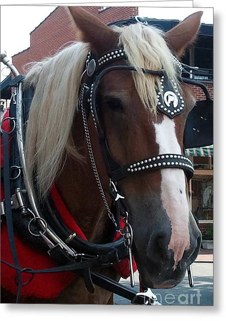Horse And Buggy Greeting Cards - Horsing Around Greeting Card by Leara Nicole Morris-Clark