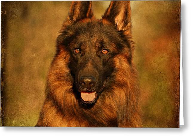 Hoss - German Shepherd Dog Greeting Card by Sandy Keeton