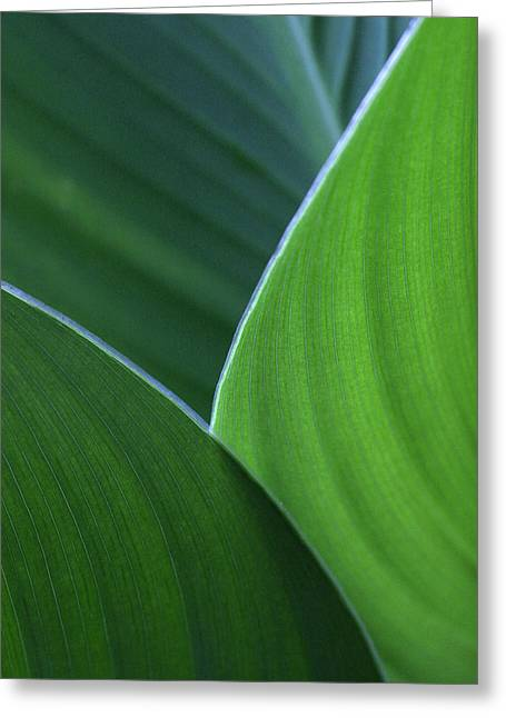 Hosta Leaf Abstract Greeting Card by Anna Miller