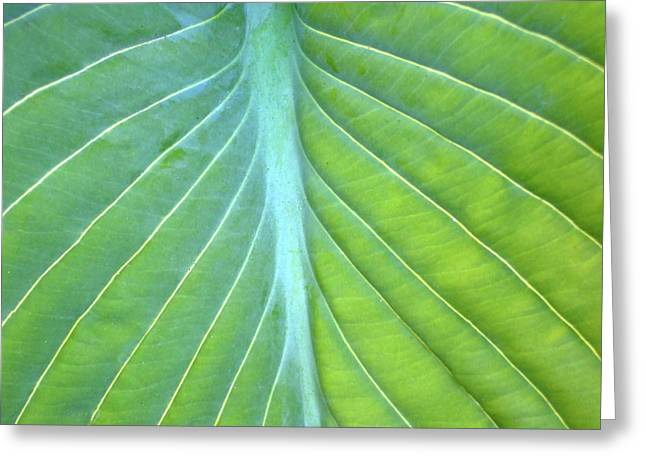 Hosta Leaf Close-up Greeting Card by Anna Miller