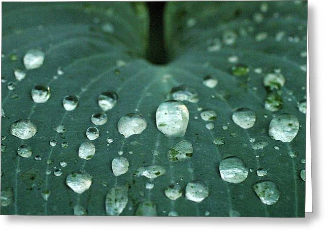 Hosta Leaf With Dew Greeting Card by Anna Miller
