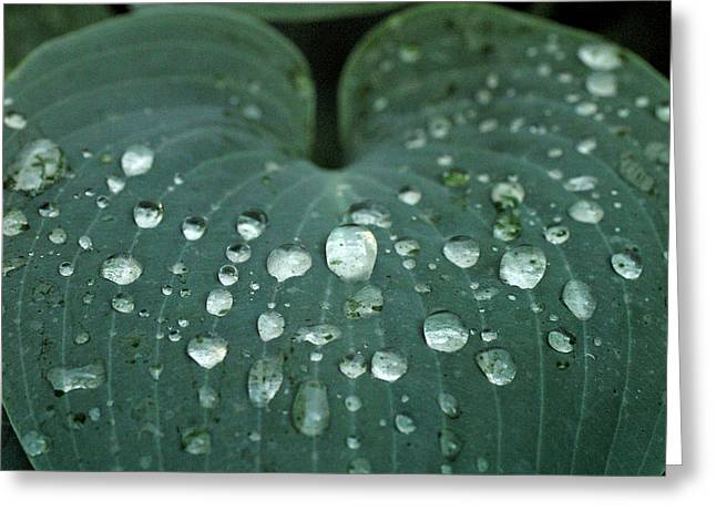 Hosta Leaf With Dew Drops Close Greeting Card by Anna Miller
