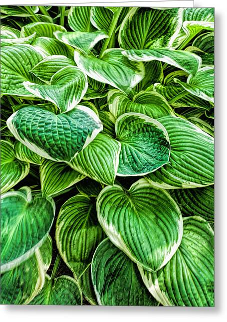 Hostas Greeting Cards - Hosta Leaves Greeting Card by Bonnie Bruno