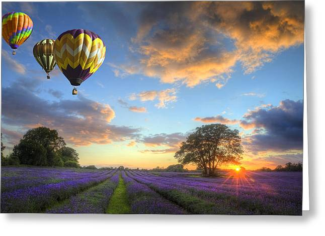 Landscape Oil Photographs Greeting Cards - Hot air balloons flying over lavender landscape sunset Greeting Card by Matthew Gibson
