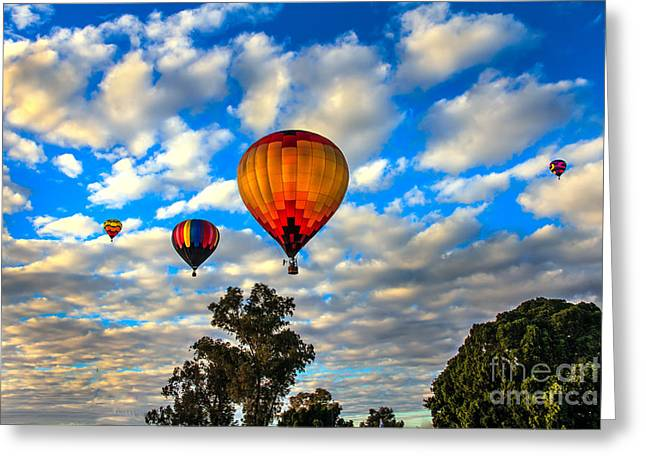 Hot Air Balloons Over Trees Greeting Card by Robert Bales