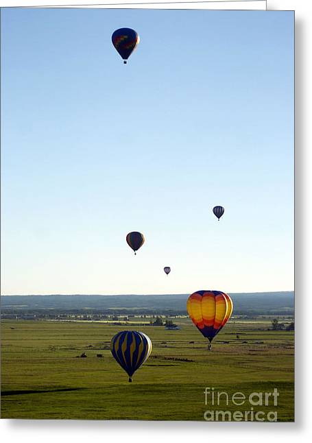 Balloon Pyrography Greeting Cards - Hot Air Balloons Greeting Card by Shannon Scott