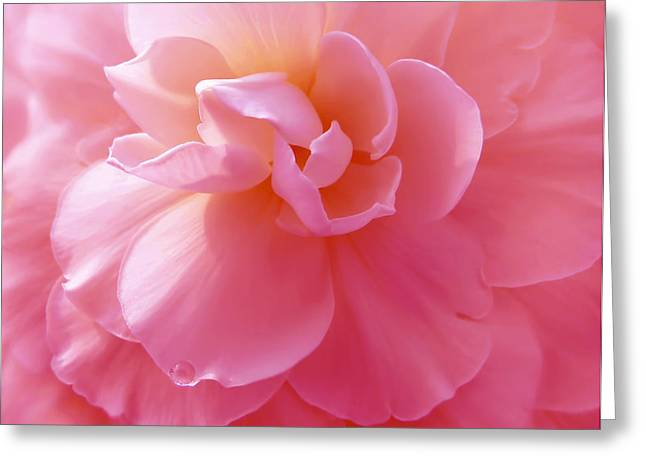 Begonia Garden Greeting Cards - Hot Pink Begonia Flower Greeting Card by Jennie Marie Schell