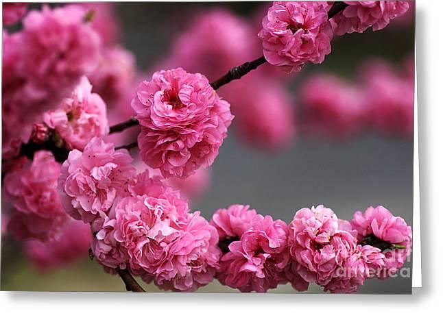 Joy Watson Greeting Cards - Hot Pink Blossom Greeting Card by Joy Watson