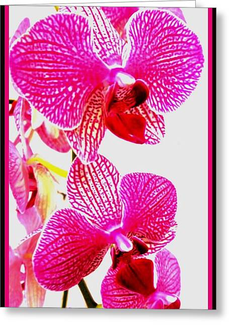 Thin Greeting Cards - Hot Pink Orchids Greeting Card by Marsha Heiken