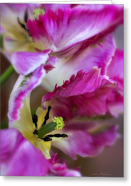 Julie Palencia Photography Greeting Cards - Hot Pink Parrot Tulips Greeting Card by Julie Palencia