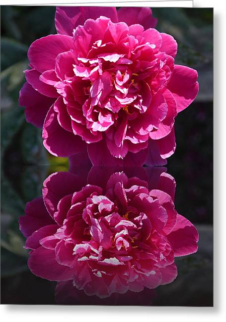 Stamen Digital Art Greeting Cards - Hot Pink Peony Reflection Greeting Card by Christiane Schulze Art And Photography