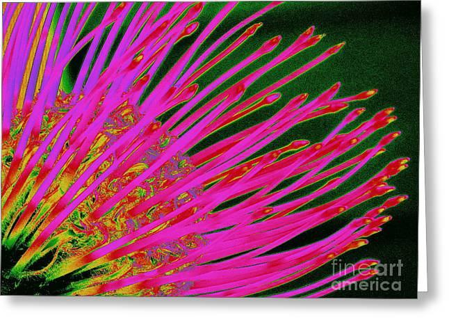 Hot Pink Protea Greeting Card by Ranjini Kandasamy