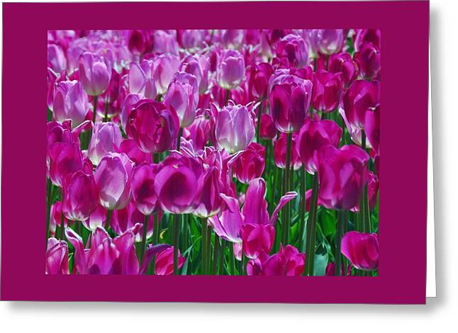 Recently Sold -  - Close Focus Floral Greeting Cards - Hot Pink Tulips 3 Greeting Card by Allen Beatty