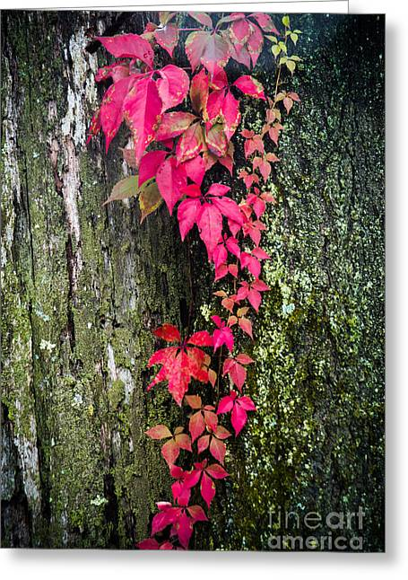 Dead Tree Trunk Greeting Cards - Hot Pink Vines Greeting Card by Sonja Quintero