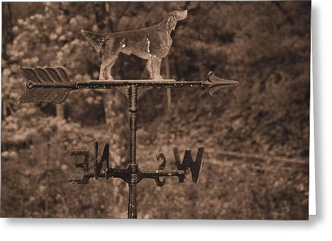 Wind Direction Greeting Cards - Hound Dog Weather Vane Greeting Card by Dan Sproul