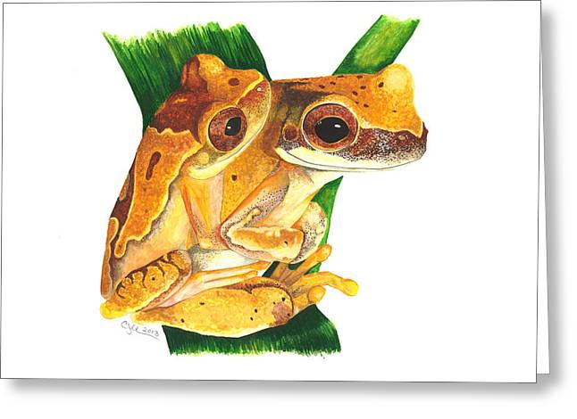 Anuran Greeting Cards - Hourglass treefrog Greeting Card by Cindy Hitchcock