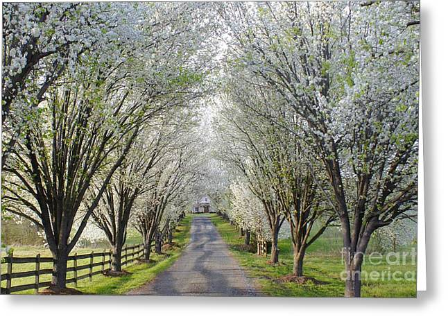 Split Rail Fence Greeting Cards - House at the end of Pear Tree Lane Greeting Card by Benanne Stiens