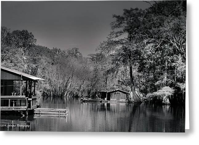 Reflections Of Trees In River Greeting Cards - House Boats On the Apalachicola River Greeting Card by Debra Forand