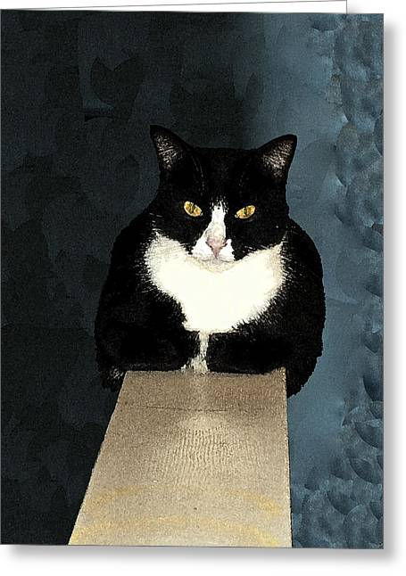 House Cat Greeting Card by Don Allen