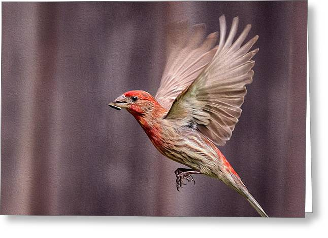 House Finch In Flight Greeting Card by Rick Barnard