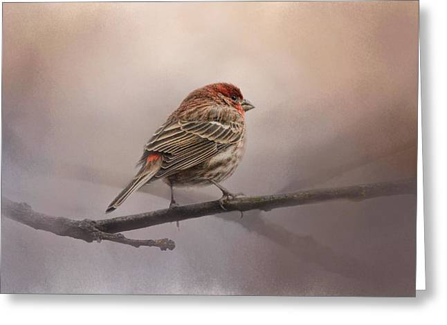 House Finch Greeting Cards - House Finch in January Greeting Card by Jai Johnson