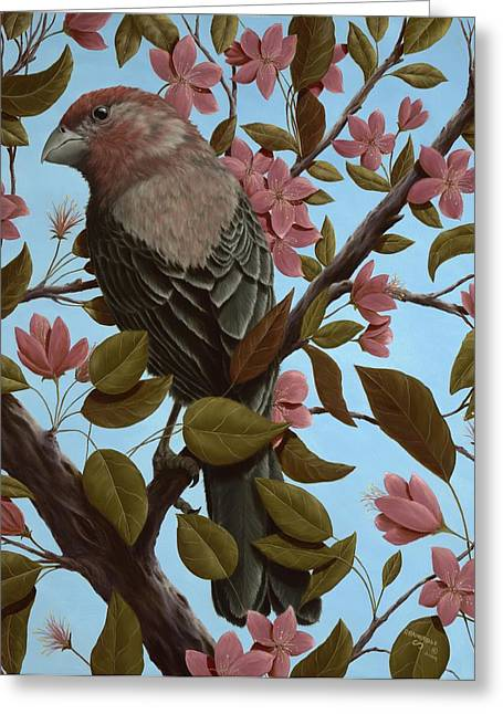 Finch Greeting Cards - House Finch Greeting Card by Rick Bainbridge