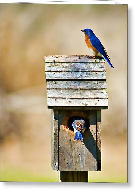 Thrush Greeting Cards - House Hunting Greeting Card by Lana Trussell