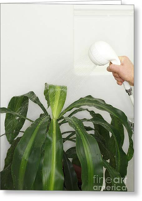 Shower Head Greeting Cards - House Plant Shower  Greeting Card by Lee Serenethos