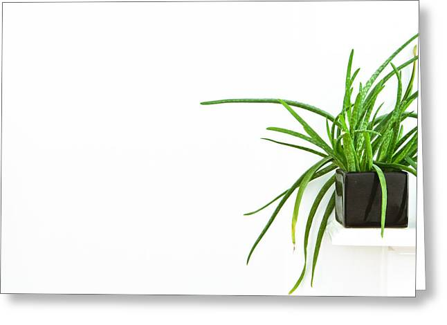 House Plant Greeting Card by Tom Gowanlock