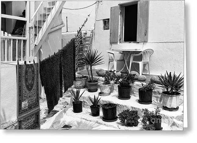 House Plants Greeting Cards - House Plants in Mykonos mono Greeting Card by John Rizzuto