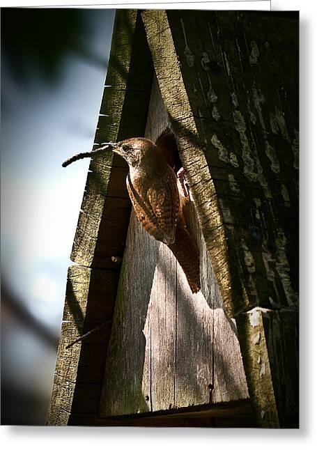 Onyonet Photo Studios Greeting Cards - House Wren at Nest Box Greeting Card by  Onyonet  Photo Studios
