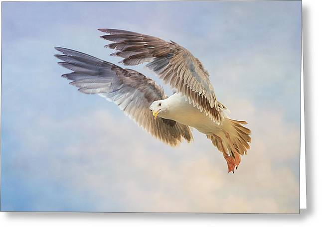 Hovering Greeting Cards - Hover 5 Greeting Card by Fraida Gutovich