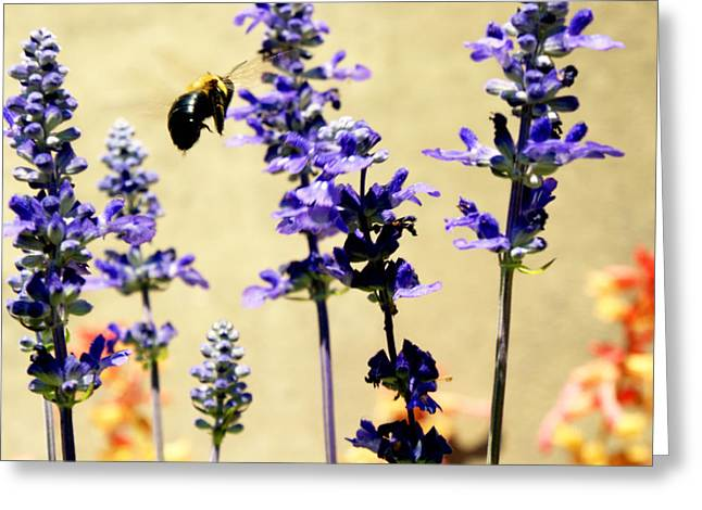 Hover Greeting Card by Off The Beaten Path Photography - Andrew Alexander