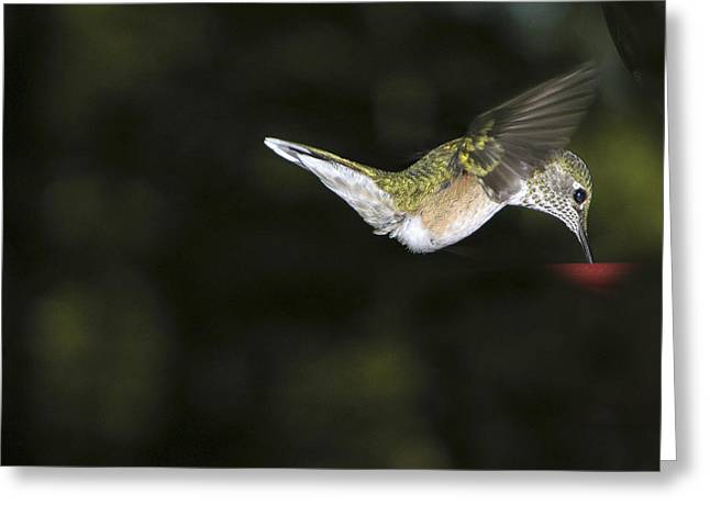 Hovering Beauty Greeting Card by Ron White