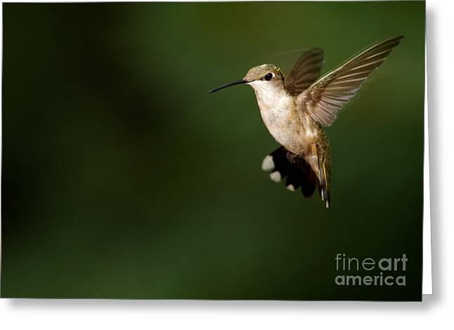 Alabama Greeting Cards - Hovering Hummingbird  Greeting Card by Sabrina L Ryan