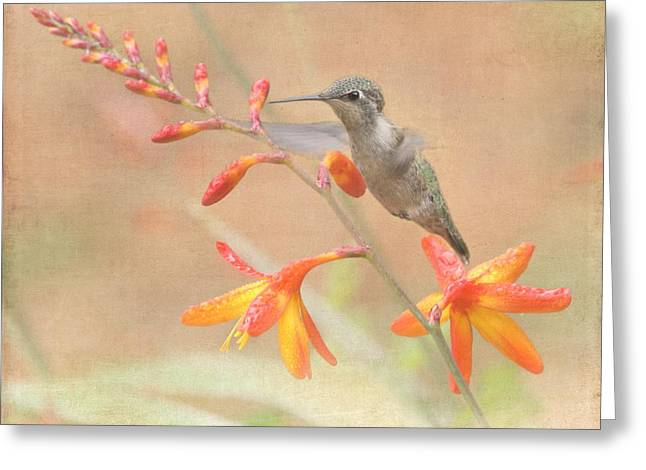 Hovering Greeting Cards - Hovering in the Crocosmia Greeting Card by Angie Vogel