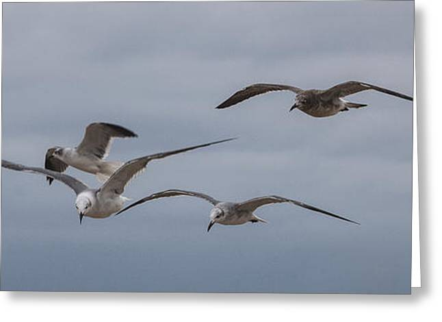 Flying Seagull Greeting Cards - Hovering Sea Gulls Greeting Card by Steve Gravano