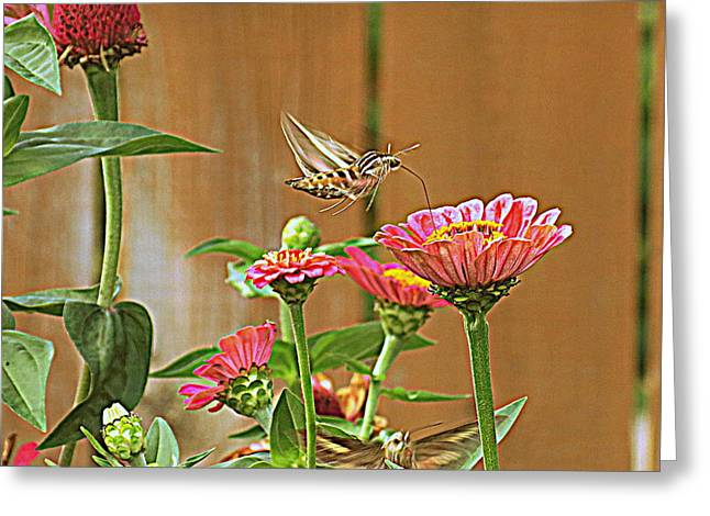 Photogrpah Greeting Cards - Hovering Sphinx Moth Greeting Card by Kay Novy