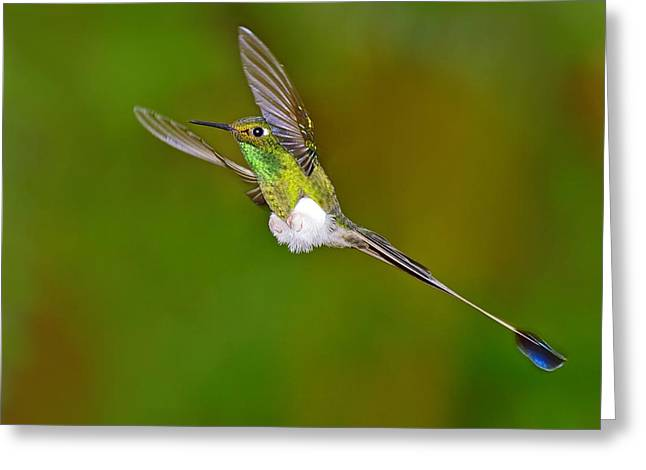 Racquet Greeting Cards - Hovering Greeting Card by Tony Beck