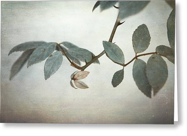 Green Leafs Greeting Cards - How Delicate This Balance Greeting Card by Laurie Search