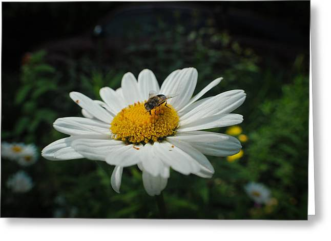 How Doth The Little Busy Bee Greeting Card by Laura Pineda