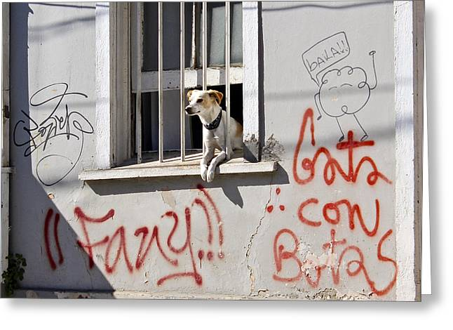How Much Is That Doggie In The Window? Greeting Card by Kurt Van Wagner
