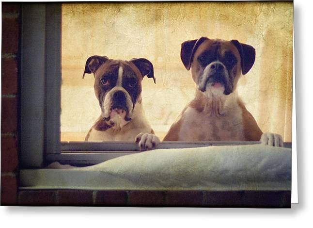 Brindle Greeting Cards - How Much is that Doggie in the Window? Greeting Card by Stephanie McDowell