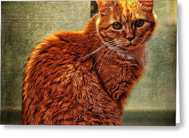 How Much is That Kitty in the Window Greeting Card by Karen Slagle