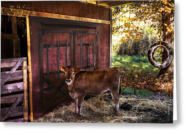 Fall In Georgia Greeting Cards - How Now Brown Cow? Greeting Card by Debra and Dave Vanderlaan