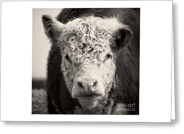 How Now Brown Cow Square Format Greeting Card by Edward Fielding